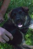 Man& x27; s beste vriend, huisdier, grappige hond, slim dier, Royalty-vrije Stock Fotografie