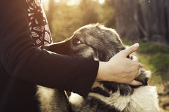 Man's bestfriend. A very loving dog that wants a hug Stock Photography