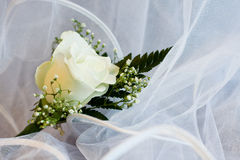 Man's boutonniere. Single man's bridal white rose on the veil Stock Photos