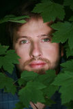 Man's face surrounded by leaves. Man's face surrounded by green leaves and foliage Stock Images