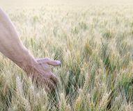 Man's hand in field Stock Photo