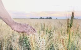 Man's hand in field Royalty Free Stock Images