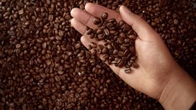 Man`s hand full of coffee beans. Man hand hold coffee beans and then throw it down. Top view Royalty Free Stock Photos