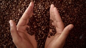 Man`s hand full of coffee beans. Man hand hold coffee beans and then throw it down. Top view Stock Photos
