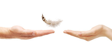Man's hand gives the feather female hand Royalty Free Stock Images