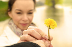 Man's hand gives a flower beautiful girl Royalty Free Stock Images