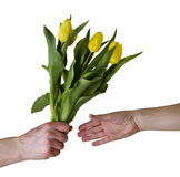 Giving flowers. Man's hand giving a bunch of yellow tulips to a woman Royalty Free Stock Photo