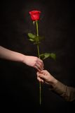 Man's hand giving a rose Royalty Free Stock Photography