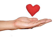 Man's hand hold out  and red heart on isolate white background Royalty Free Stock Photo