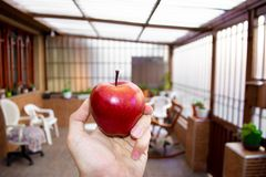 Holding an red apple in his hand stock image