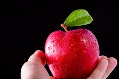 Man & x27;s hand holds red apple royalty free stock image
