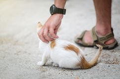 Man`s hand patting a homeless kitten stock photos