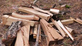 The man`s hand shifts the firewood in the forest. A close-up of a man`s hand shifts firewood from a large pile in the forest stock video footage