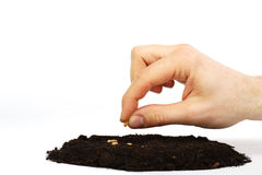Man's hand sower wheat seed in earth Royalty Free Stock Images