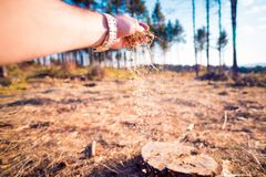 Man`s hand spreading sawdust on the field stock photos