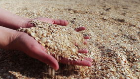 A man's hand takes seashells, sand on the beach stock video footage