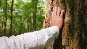 A man`s hand touches a tree`s close-up, bark of a tree is close-up. Close up shot. A man`s hand touches a tree`s close-up, bark of a tree is close-up stock video