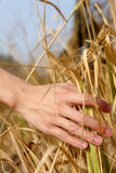 Man's hand touching the grass, 'feeling nature Stock Photography