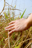 Man's hand touching the grass, 'feeling nature Stock Photos
