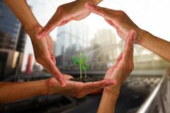 Man`s hands around young green sprouts isolated on blurred city background with soft sunlight Stock Photography