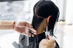 Man`s hands cut and comb female dark brown hair in a beauty salon with mirrors.  royalty free stock image