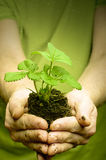 Man's hands holding strawberry seedling in dirt, water drops Stock Photos