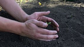 Man`s hands planting the seedlings into the soil over black background stock video