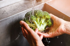 Man's hands wash broccoli. stock images