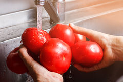 Man's hands wash tomatoes. Stock Photo