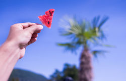 Man`s keeps the watermelon piece on the toothpick on the blue sk Royalty Free Stock Image