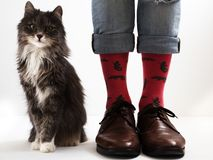 Man` s lägger benen på ryggen i roliga sockor och härlig kattunge Arkivbild