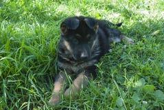 Man& x27; s najlepszy przyjaciel, zwierzę domowe, śmieszny pies, mądry zwierzę, Obrazy Royalty Free