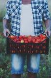 Man& x27; s ręki mienia czerwoni słodcy pomidory Zdjęcia Stock