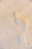 Man's right foot footprint on light beach sand, Mexico 2015 Stock Image