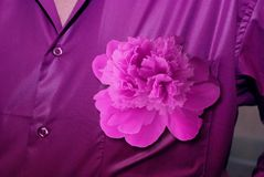 Man`s shirt violet color with a peony in a buttonhole Stock Images