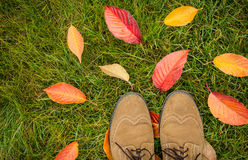 Man's shoes and colorful autumn leaves on green grass. (lawn) background captured from above (top view). Fall in the garden - flat lay composition Royalty Free Stock Image