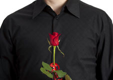 Man's torso with red rose in front. Man, wearing a black shirt, standing, holding a beautiful red rose in front of his torso Stock Photo
