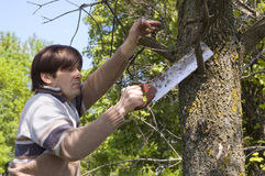 Man sawing a branch with an handsaw Stock Photography