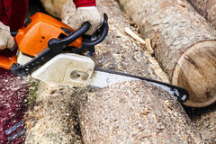 Man sawing a log in his back yard Royalty Free Stock Photography