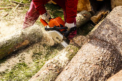 Man sawing a log in his back yard Stock Image