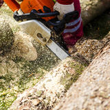 Man sawing a log in his back yard Royalty Free Stock Photo
