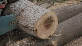 Woodcutter saws and cuts down trees and branches for fuel. slow motion stock video