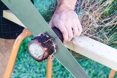Man Sawing Pine Tree Royalty Free Stock Photography