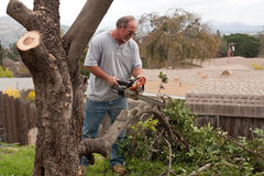 Man sawing tree branches. A man uses a chainsaw to cut up tree branches from a carob tree in a backyard Stock Photos