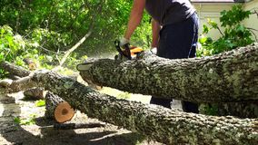 Man sawing the trunk of maple tree in garden with chainsaw stock video
