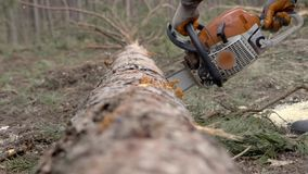 Man sawing wood chainsaw stock footage