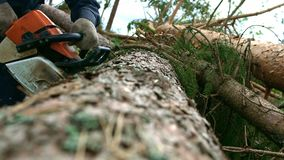 Man sawing wood by chainsaw. Professional lumberjack cutting tree by chainsaw stock footage
