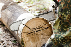 Man sawing wood log with a chainsaw. Stock Images