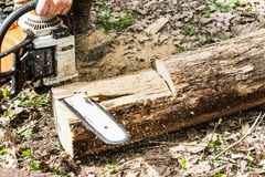 Man sawing wood log with a chainsaw. Royalty Free Stock Photo