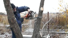 A man saws a tree. Worker man sawing tree. Man sawing wood chainsaw. Cutting through wood with chainsaw. Worker man sawing tree trunk into pieces with chainsaw stock video